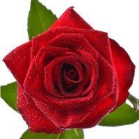 Поштучно красные розы 60 см