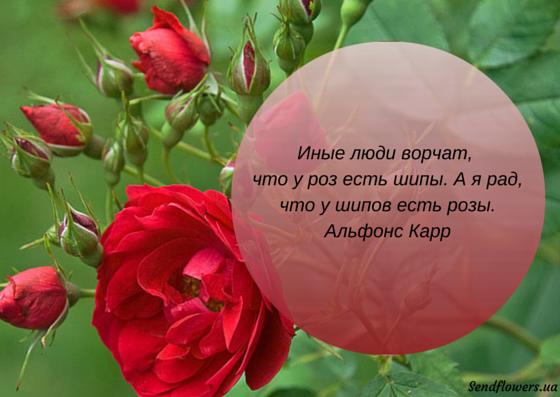 Фразы на открытку в цветы