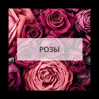 Розы в Аббевилл